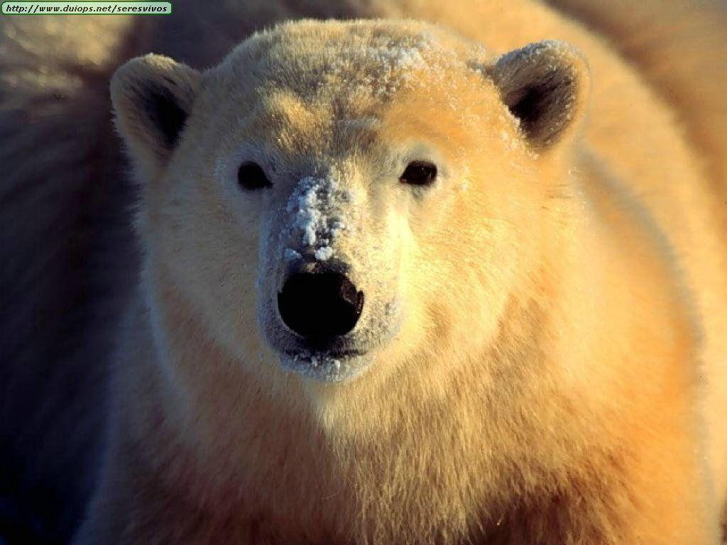 Ves que a tu hermana (Serpiente, obvio) Está a punto de ser devorada por un oso. ¿Cómo actúas?