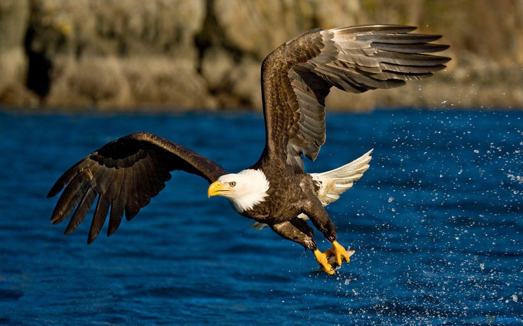 Todos conocemos al animal insignia del país. ¿Pero cómo se llama ese ave?