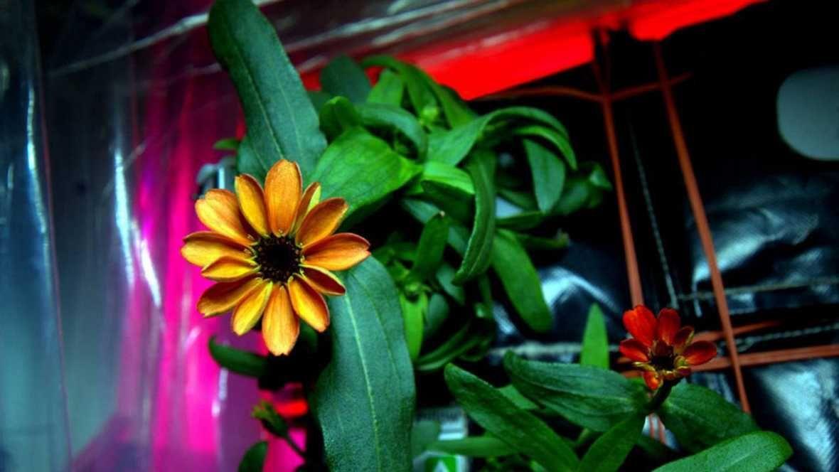 Es posible cultivar plantas en el espacio.