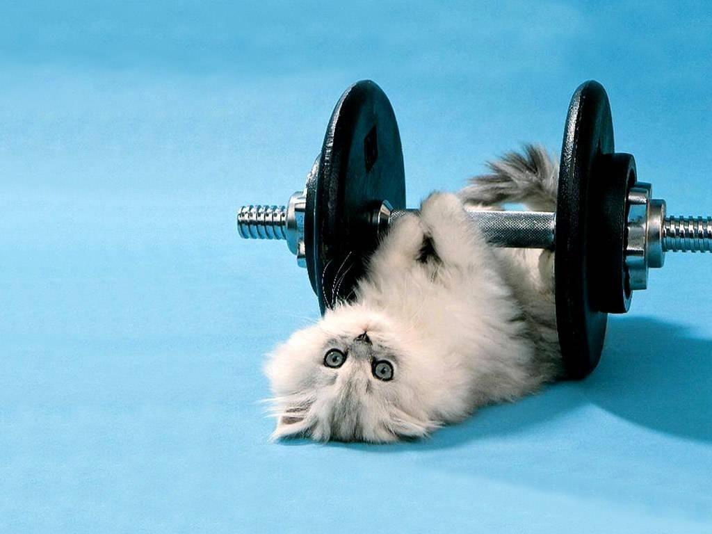 ¿Estás en forma?