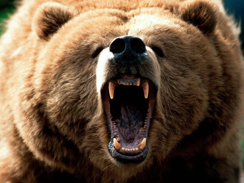 Oyes un ruido detrás, ¡¡¡¡ es un oso !!!!