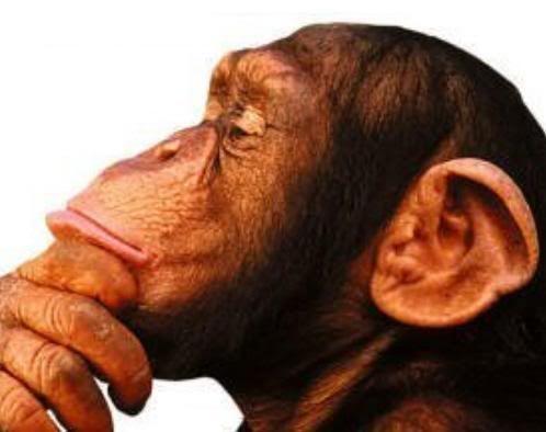 10895 - ¿Eres capaz de identificar todos estos extraños animales?