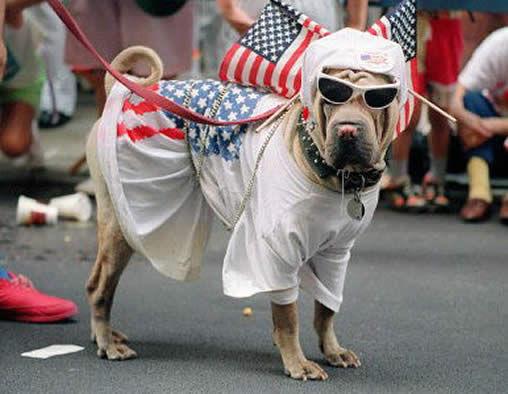 Registran a un perro para que vote en elecciones de EE.UU