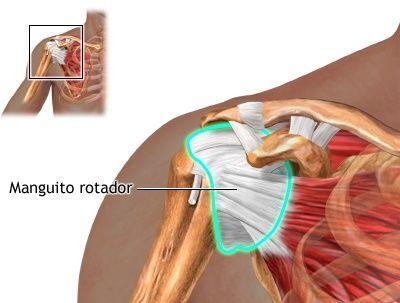 ¿Cuáles músculos forman el manguito de los rotadores?