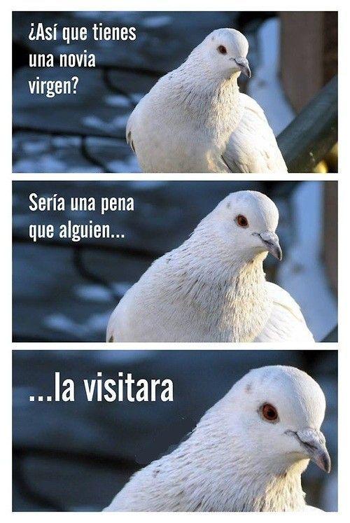 ¿Qué son las palomas?