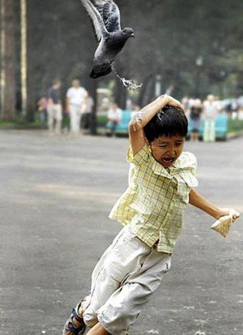 Cuando una paloma alza el vuelo tan cerca de ti que se te pone cara de aeropuerto…