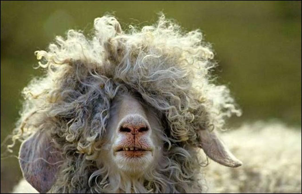 ¡Mira esta cabra!