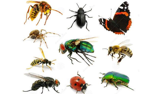 12159 - ¿Puedes relacionar los siguientes insectos con sus nombres?