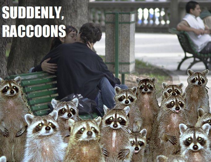 ¿Cuántos mapaches de oro hay en la campaña?