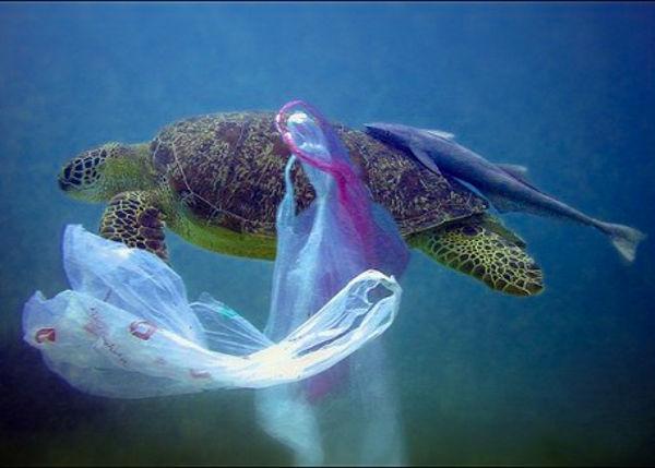 Empezamos, ¿cuánto tiempo tarda en degradarse de media una bolsa de plástico?