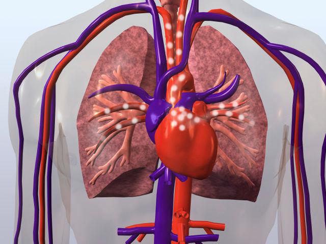 ¿Qué tipo de sangre transportan las arterias NO pulmonares?
