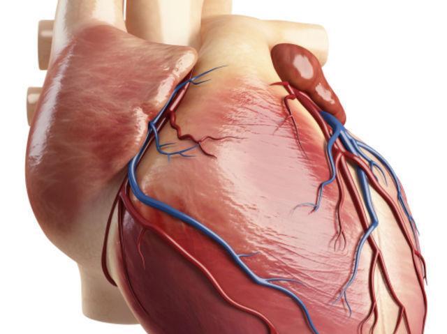 ¿Cuáles son los ventrículos del corazón?