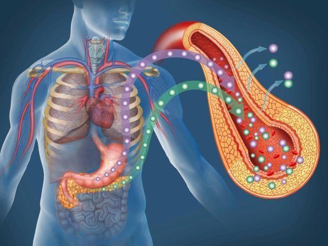 ¿Qué función cumple el páncreas?