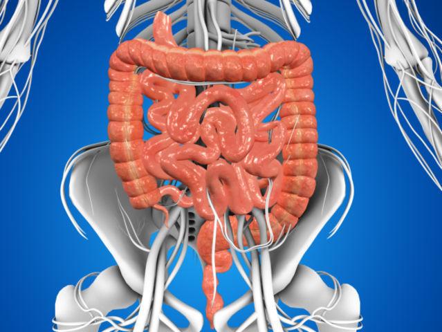 Aproximadamente, ¿cuánto mide el intestino delgado?