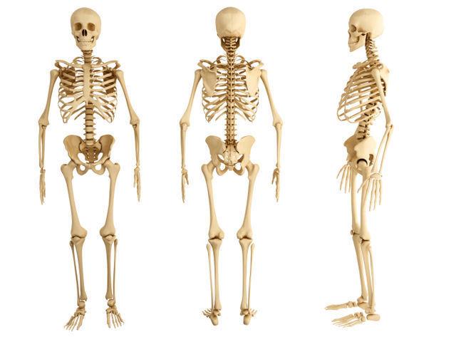 ¿Cuántos huesos tiene un adulto?