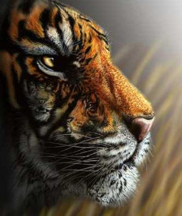 ¿Cuántas caras de tigres ves en la siguiente imagen?