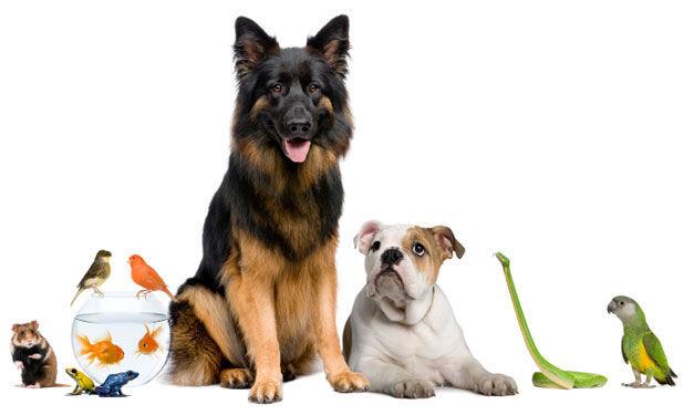 ¿Qué tipo de mascota prefieres?