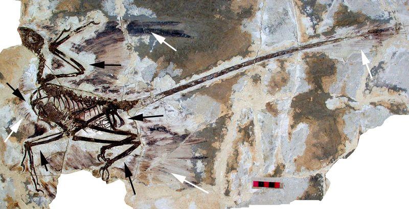 Las plumas no las inventaron las aves (duh), sinó los dinos. Pero... ¿Cuál de estos dinosaurios aún no las tenía?
