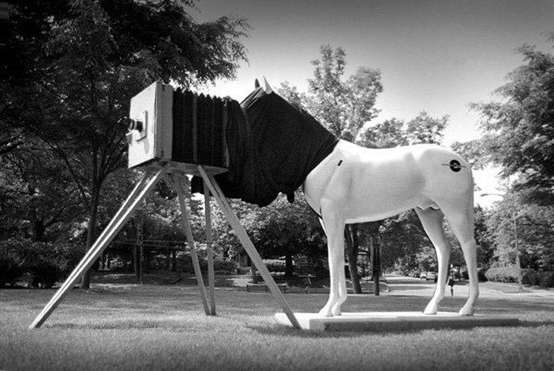 14349 - ¿Podrás adivinar la raza de estos caballos de película?