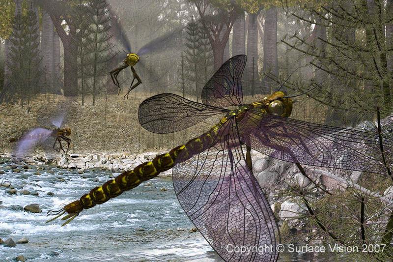La envergadura alar de Meganeura sp. (Libélula) era de unos...
