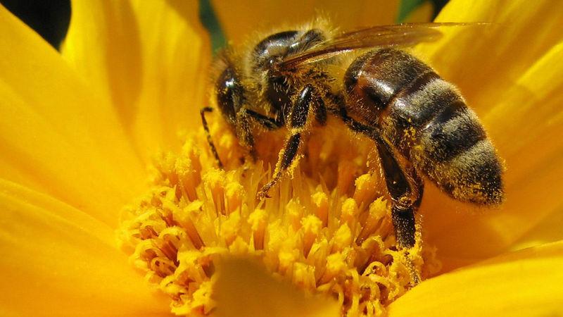 Te rodea una panda de abejas que aún no están furiosas, lejos de su colmena...
