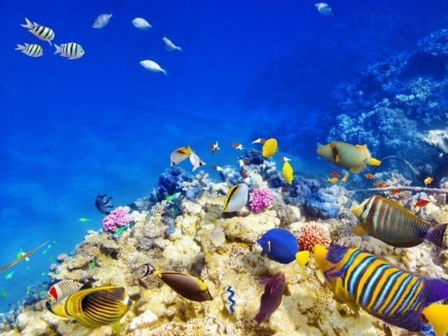 ¿De la costa de que país pertenece la gran barrera de coral?