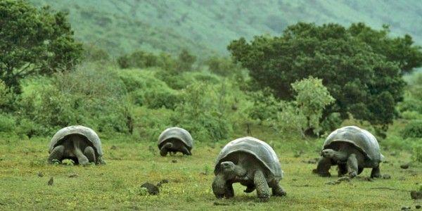 ¿Cuántos años vivió la tortuga más longeva de la que se tiene constancia?