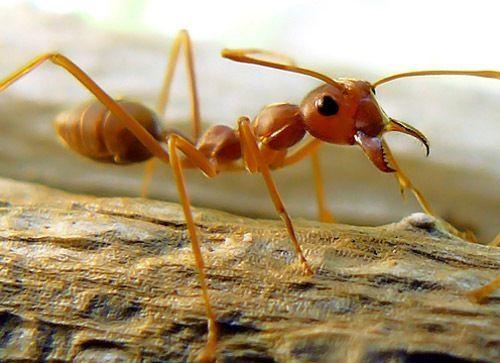 ¿De estos animales, cuál no es un insecto?