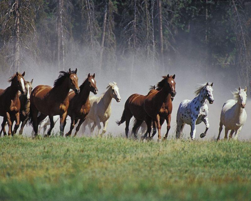 15522 - ¿Sabes de la procedencia de estas razas de caballos?