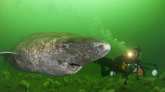 ¿Sabes el nombre de este tiburón tan raro?