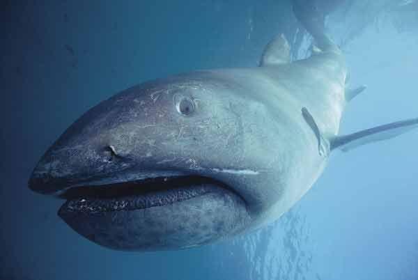 ¿Y este tiburón tan...simpático, cual es?