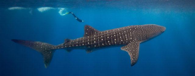 ¿Y esta majestruosa criatura cómo se llama? Fácil!