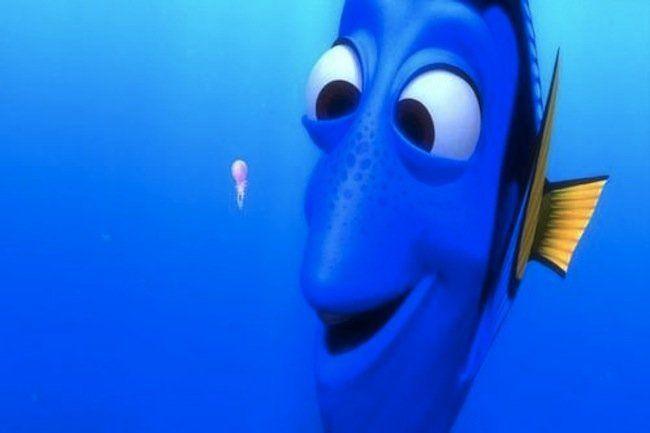¿Cuánto dura la memoria de un pez?