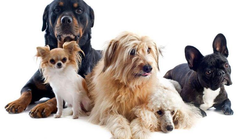 ¿De qué color ven los perros?