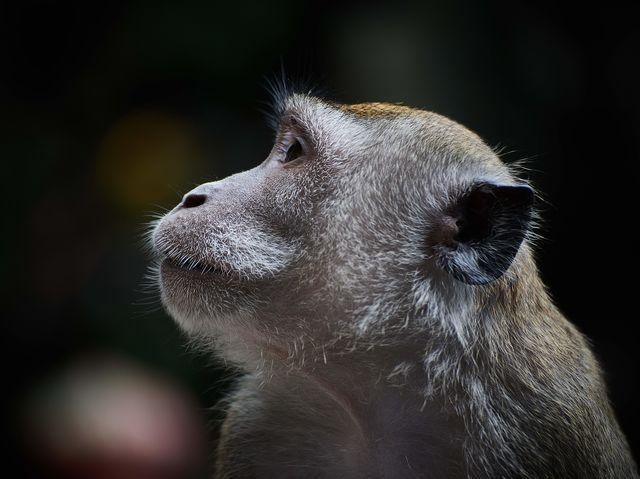 Comparado a los humanos, ¿cuántas horas extras de sueño necesitan los chimpancés cada noche?