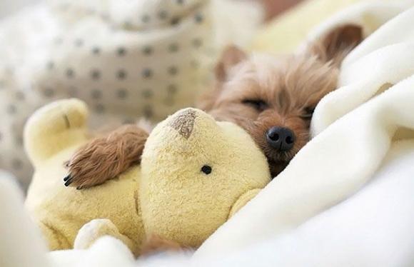 16060 - ¿Cuánto sabes sobre dormir?