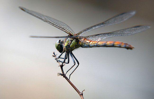 Una libélula vive aproximadamente 48 horas.