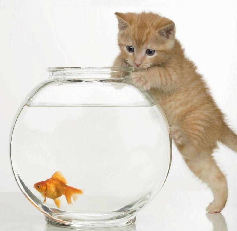 Un amig@ te deja al cuidado de su mascota porque estará unos días fuera pero se te olvida darle de comer y se muere ¿qué haces?