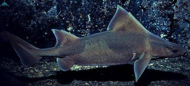 Y para acabar ¿Cómo se llama este tiburón?