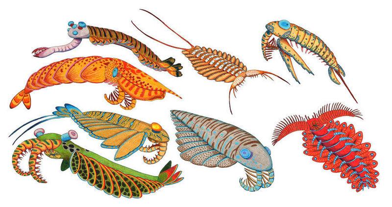 Algunos animales CÁMBRICOS (Anomalocaris, Opabinia, Hallucigenia...) se relacionan (dudosamente) con un grupo actual... ¿cuál?