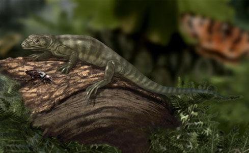 Hylonomus lyelli es considerado como el primer reptil, y en el CARBONÍFERO aparece muy bien conservado dentro de troncos de...