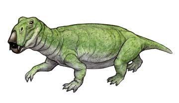 Lystrosaurus era muy abundante en el TRIÁSICO, pues sobrevivió