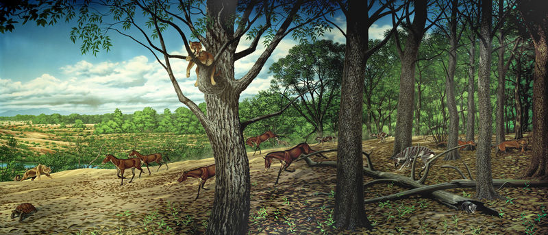 En el OLIGOCENO vivió el mayor mamífero terrestre de la historia, pariente cercano de los/las...