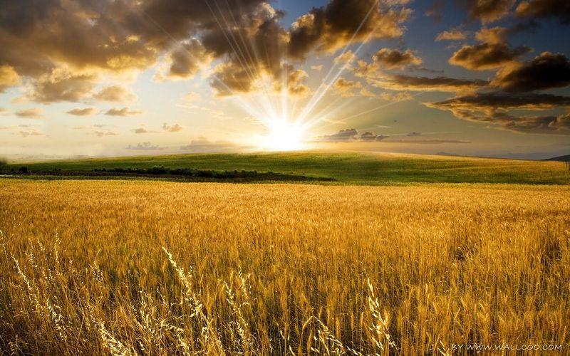 La cosecha ha sido mejor que en años pasados. ¿A qué se debe?