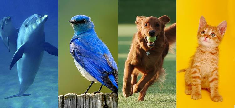 16608 - Según tu personalidad, ¿qué animal serías?