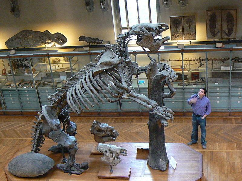 El Megatherium fue un animal gigantesco común en el Pleistoceno. Actualmente, ¿Cuál especie es la más cercana a él?