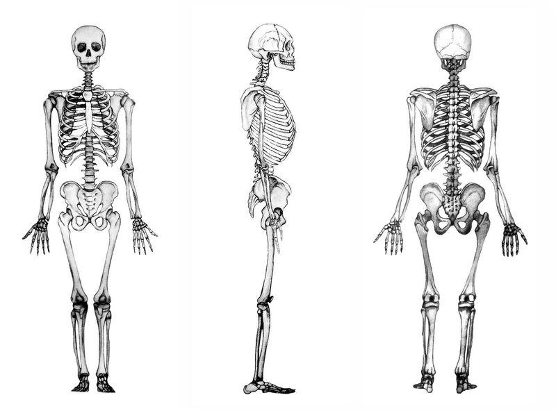 Mi estructura ósea es: