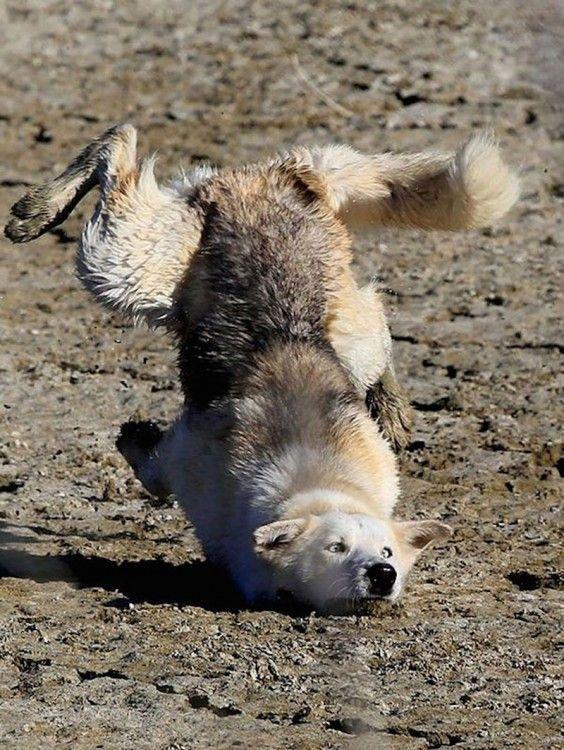 ¿Los perros sudan?