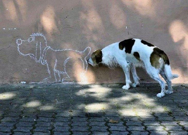 ¿Por qué el perro come césped?
