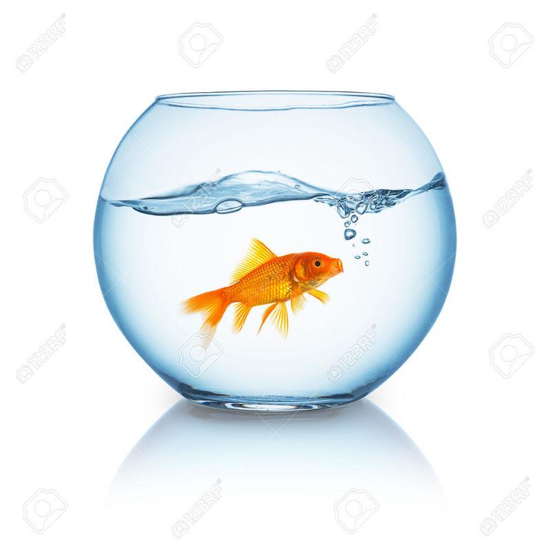 Viral zalo eres realmente un amante de los perros for Small fish bowl filter